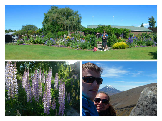 Blenheim záhrada, Tongariro, kvety